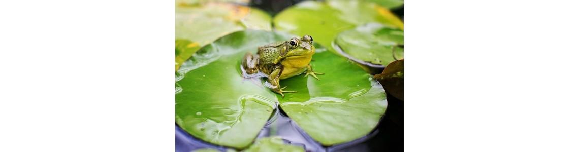 Výtvarné činnosti pro předškoláky a mladší školáky, aneb 3x žába