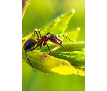 Letní aktivity pro předškoláky - mravenci